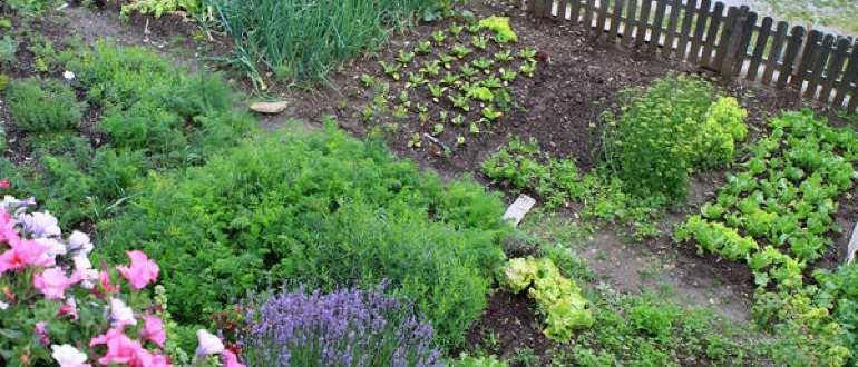 Что посадить на огороде: список овощей и фруктов, планировка высадки