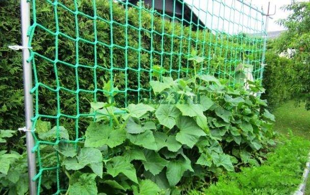 выращивание на сетке
