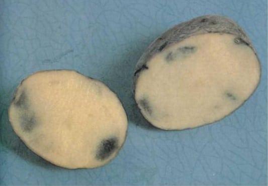 почернение картофеля