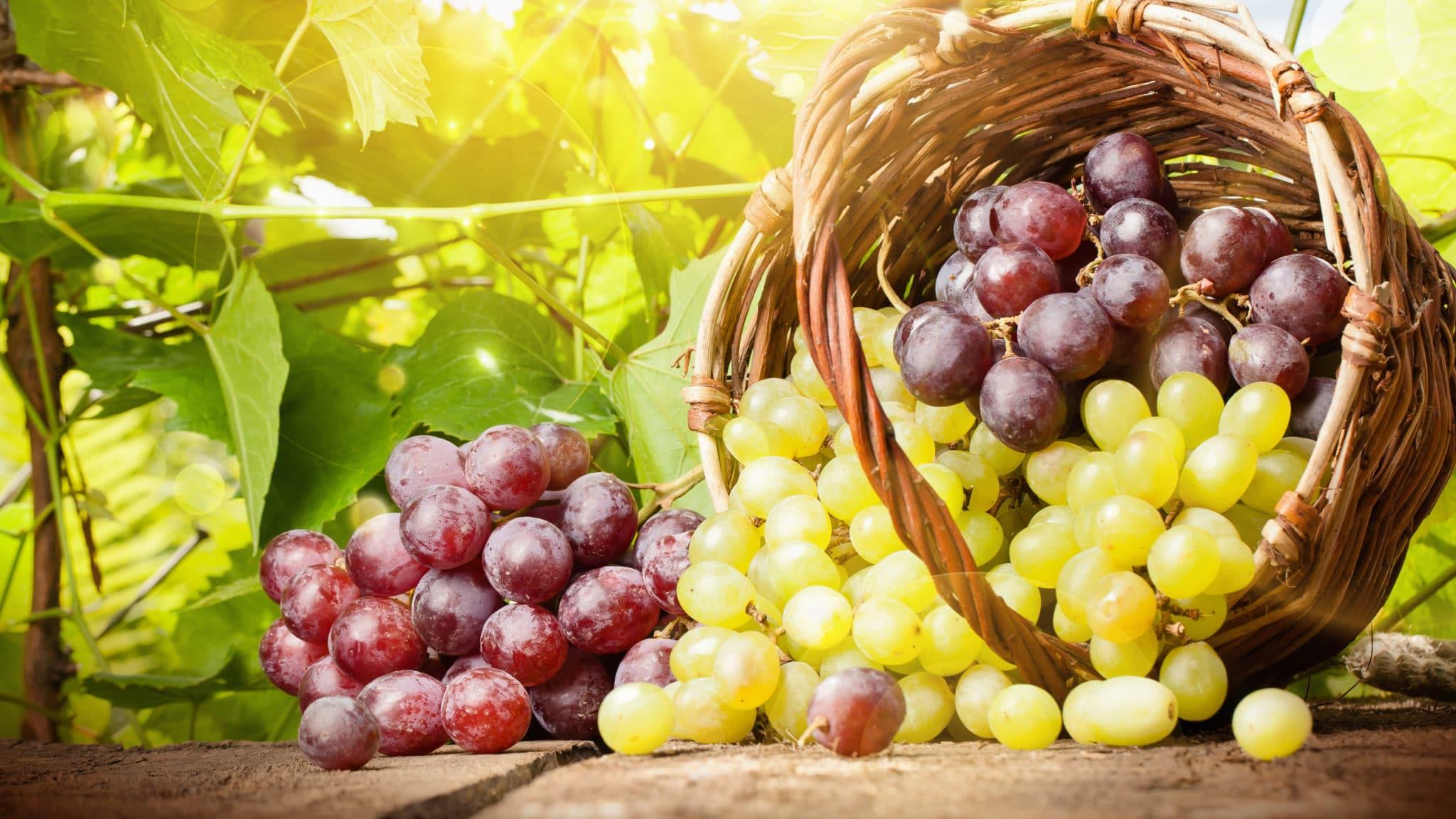 Варенье из винограда на зиму: простой рецепт без косточек, как сделать самому