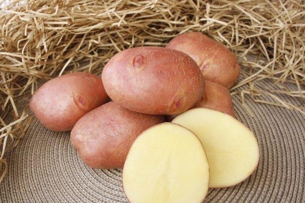 Высокоурожайный морозоустойчивый сорт картофеля Журавинка с отменным вкусом