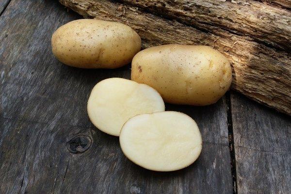 Лучшие сорта картофеля для алтайского края