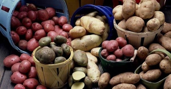 Лучшие сорта ранней картошки: посадка и уход