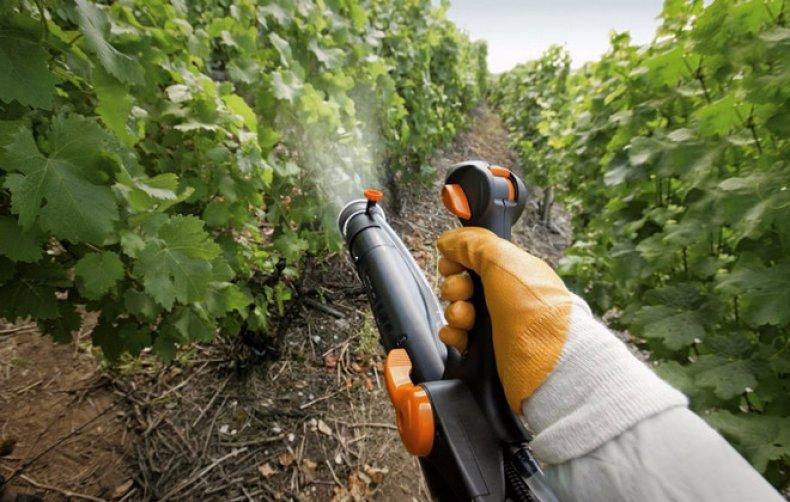 Обработка лозы винограда на зиму