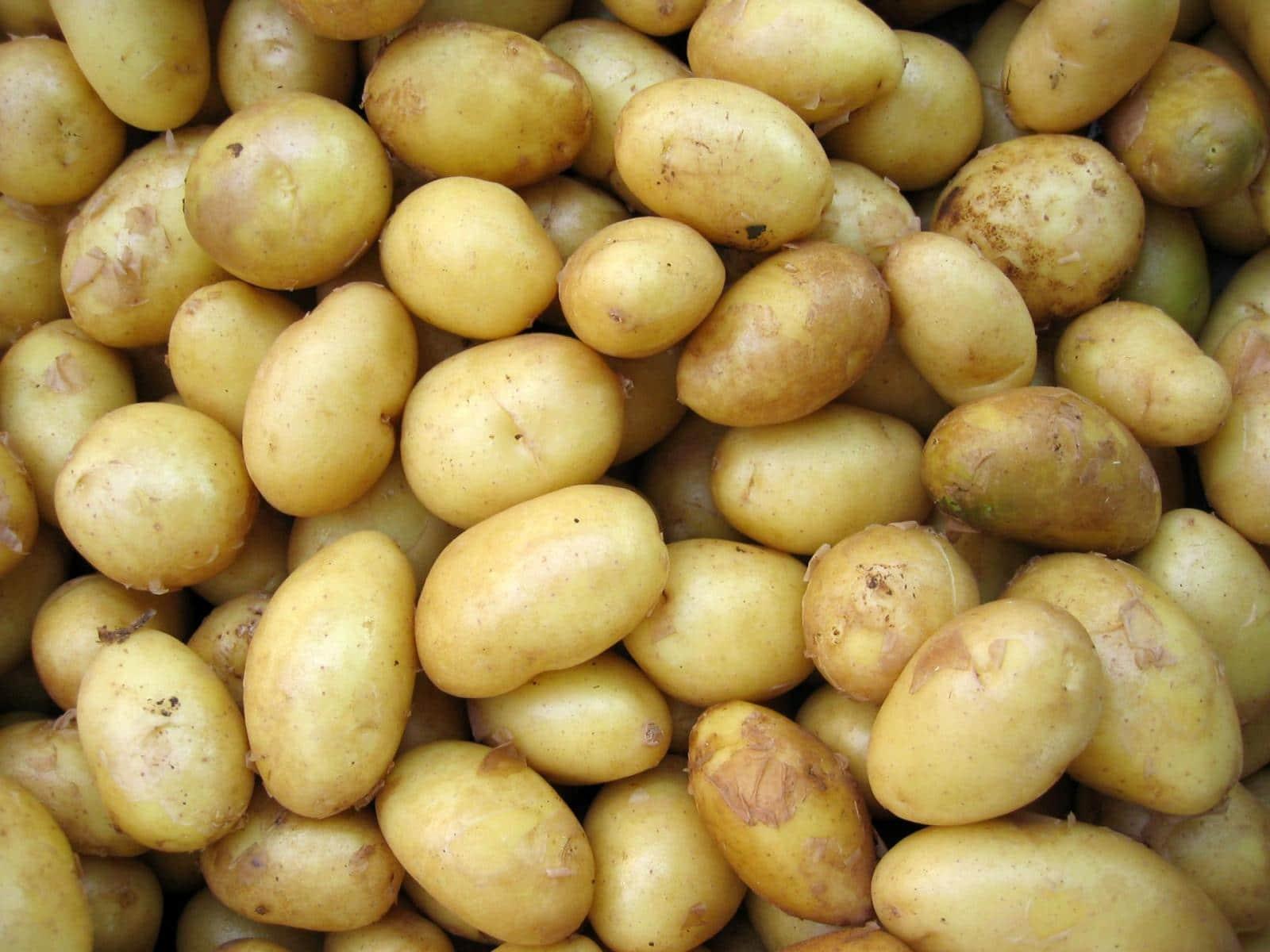 Картофель скарб описание сорта с фото характеристика особенности выращивания отзывы