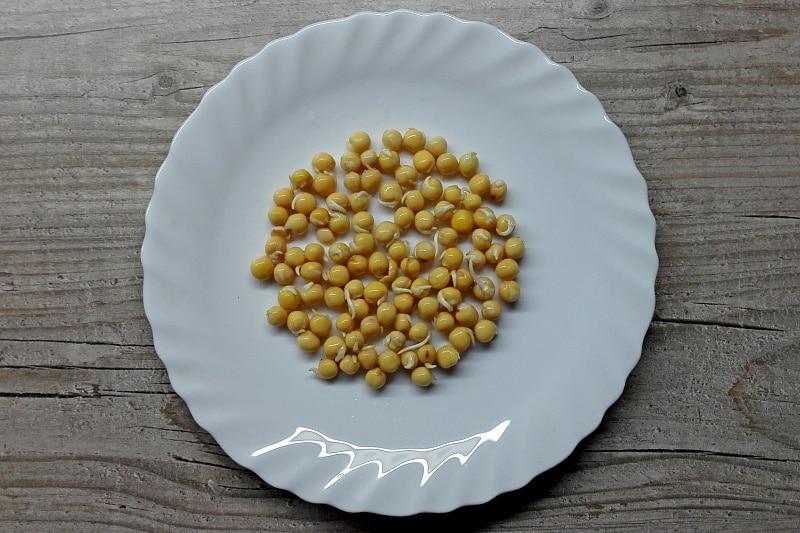 Как можно быстро прорастить семена гороха в домашних условиях его польза и вред