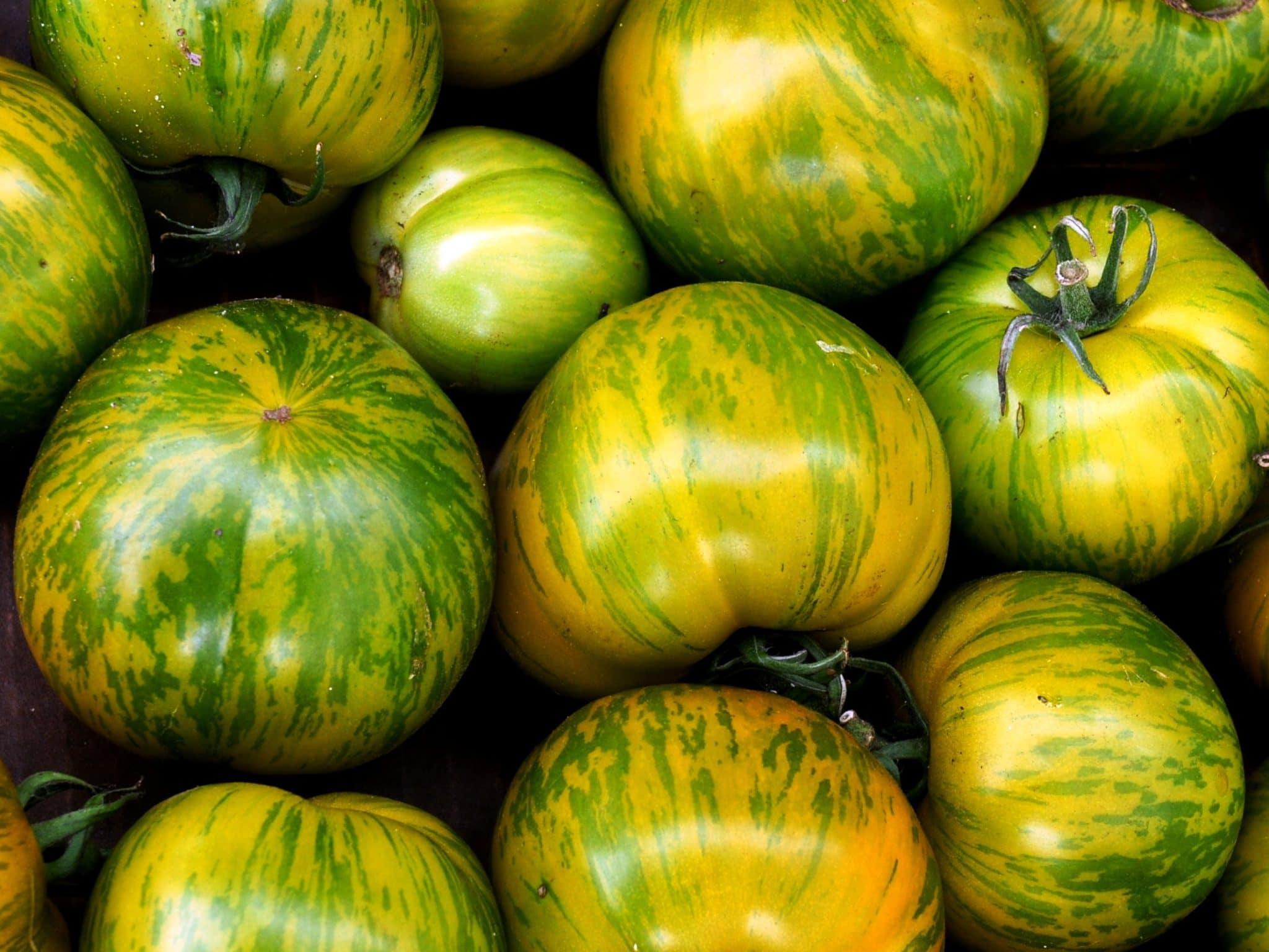 Помидоры семена лучшие сорта для сибири