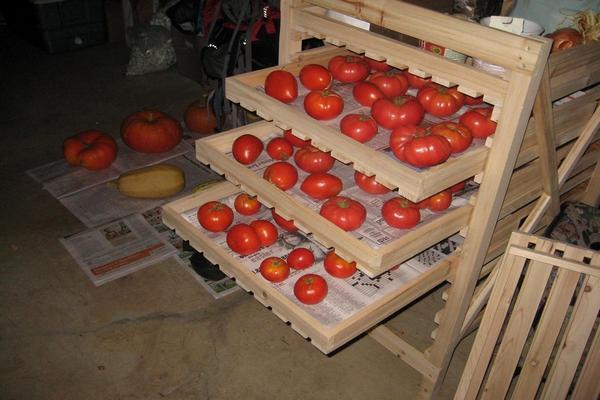 Где хранить помидоры для полного дозревания