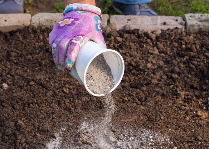 Капуста посадка и уход в открытом грунте борьба с вредителями