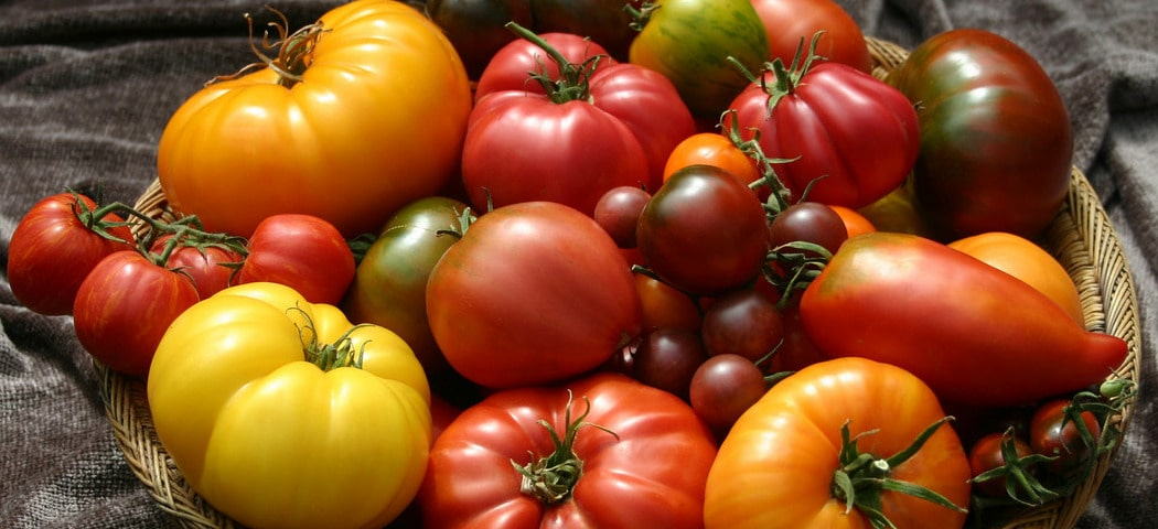 Самые сахаристые сорта томатов