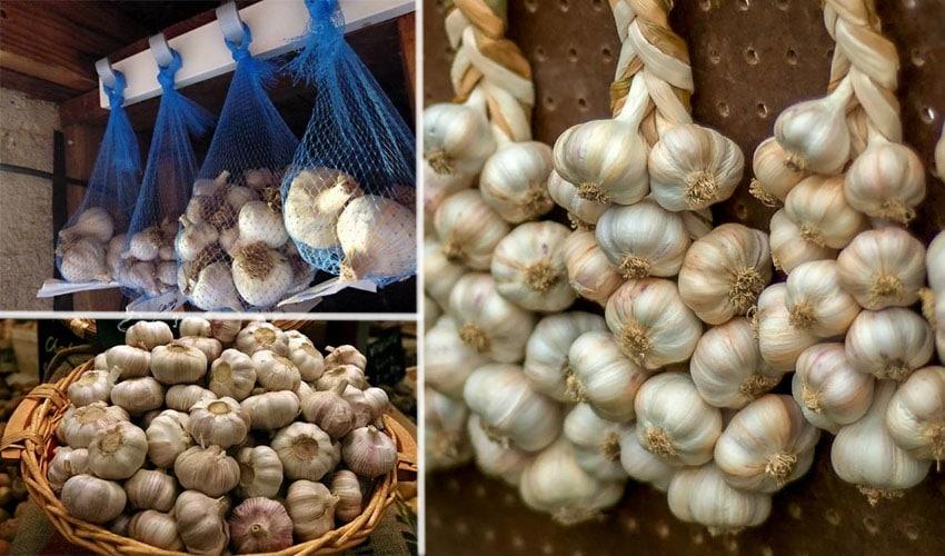 Особенности выращивания лукочеснока Рокамболь