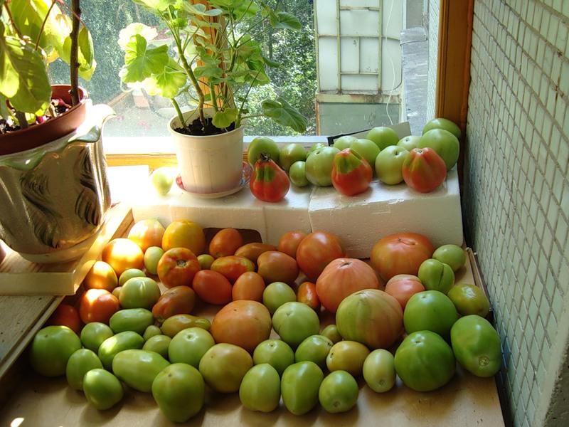 Срок годности свежих помидоров — kak.zydus.su